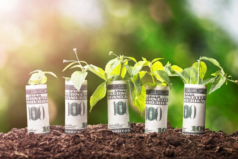 Muda de Planta enrolada em notas de dolar