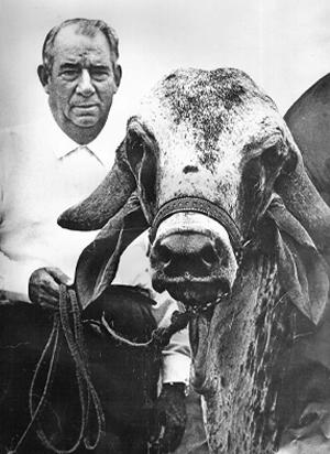 Celso Garcia Cid e sua aventura na Índia: biografia, escrita por Pellegrini, conta um episódio que mudou a pecuária no Brasil