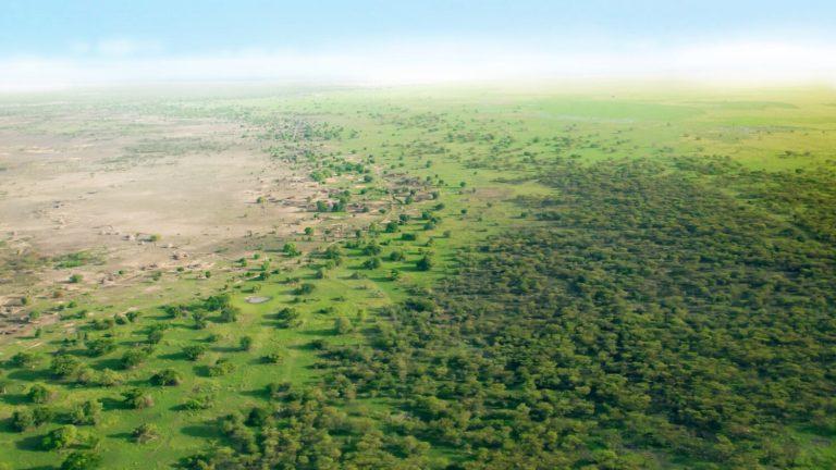 A Muralha Verde da África cerca o maior deserto do mundo, atualmente cerca de 9 milhões de quilômetros quadrados, área superior à do território brasileiro.